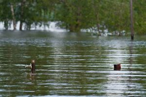 Small big 76347267 norway flood. www.nportal.no